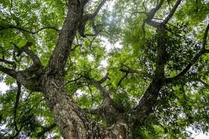 tree-579199_640